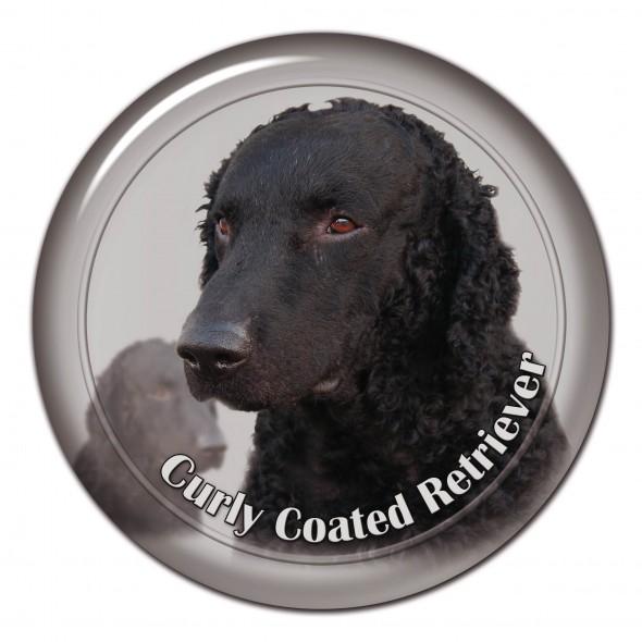 Curly Coated Retriever