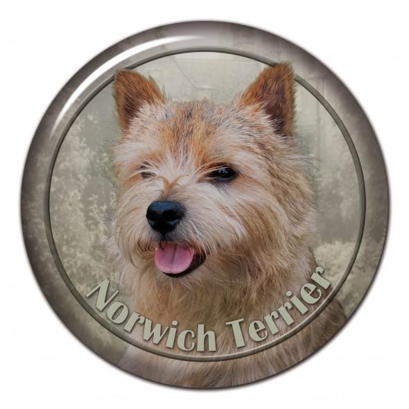 Norwich Terrier