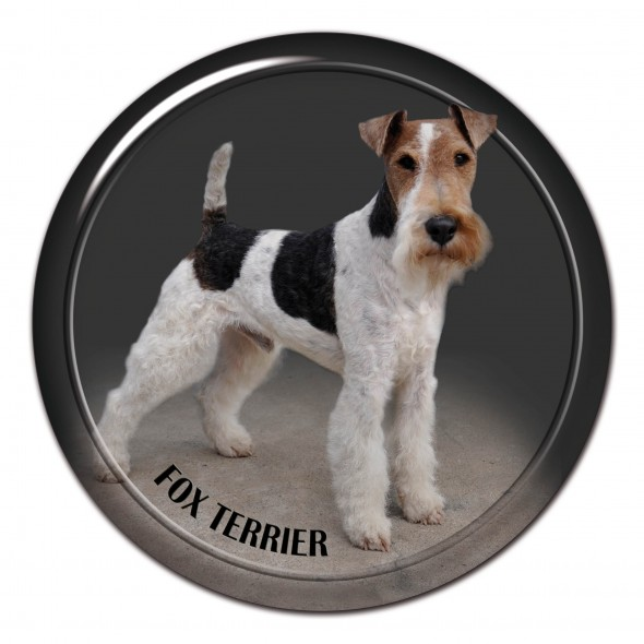 Fox Terrier Wire