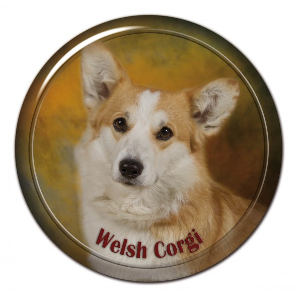Welsh Corgi