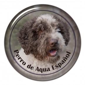 Španělský Vodní Pes 101 C